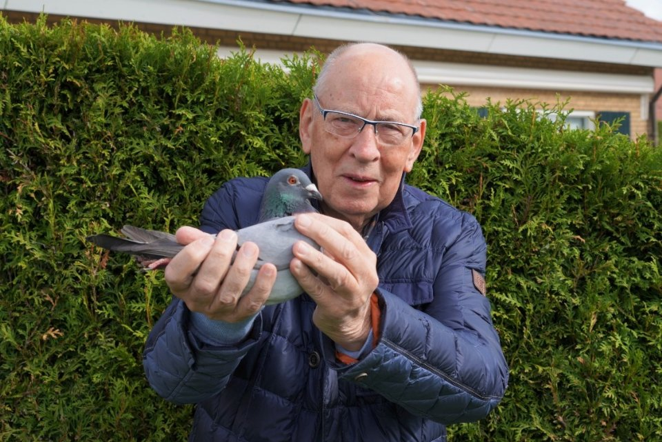 Hans with Beetle the best Dutch yearling 2019 Two pigeon sport icons