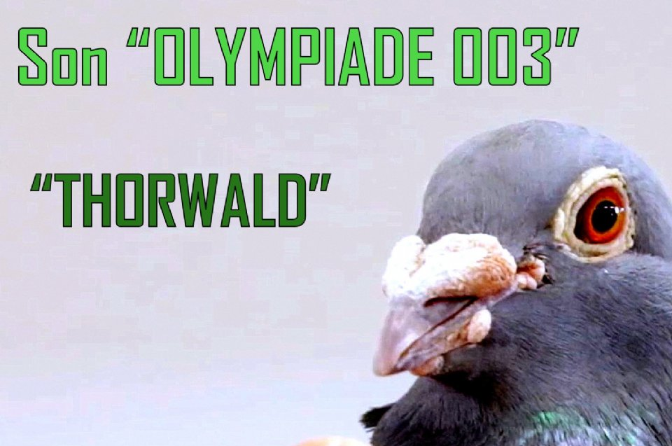 Presentation Thorwald, son of Olympiade 003