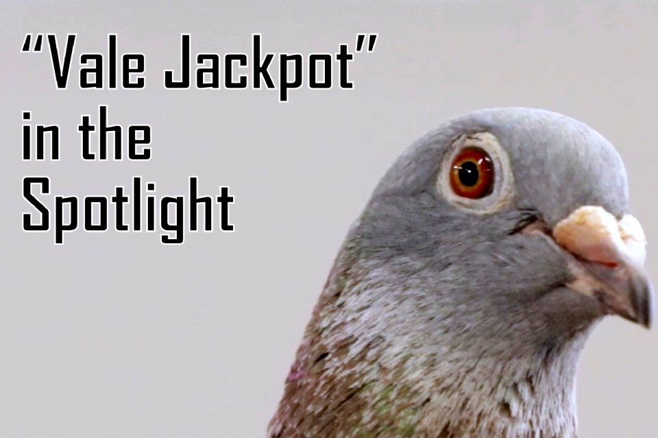 Introduction Vale Jackpot