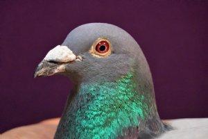 1-3-4-9-11-17-20-24-28-29-30-32-33-34 etc. Chalons en Champagne against 1,728 pigeons 4-7-16-67-70-92 etc. against 17,360 pigeons