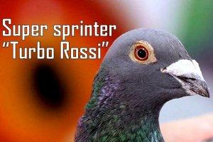 Presentation super sprinter Turbo Rossi
