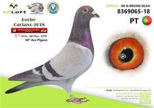 1st Final Race Derby Cartaxo 367 km. against 577 pigeons
